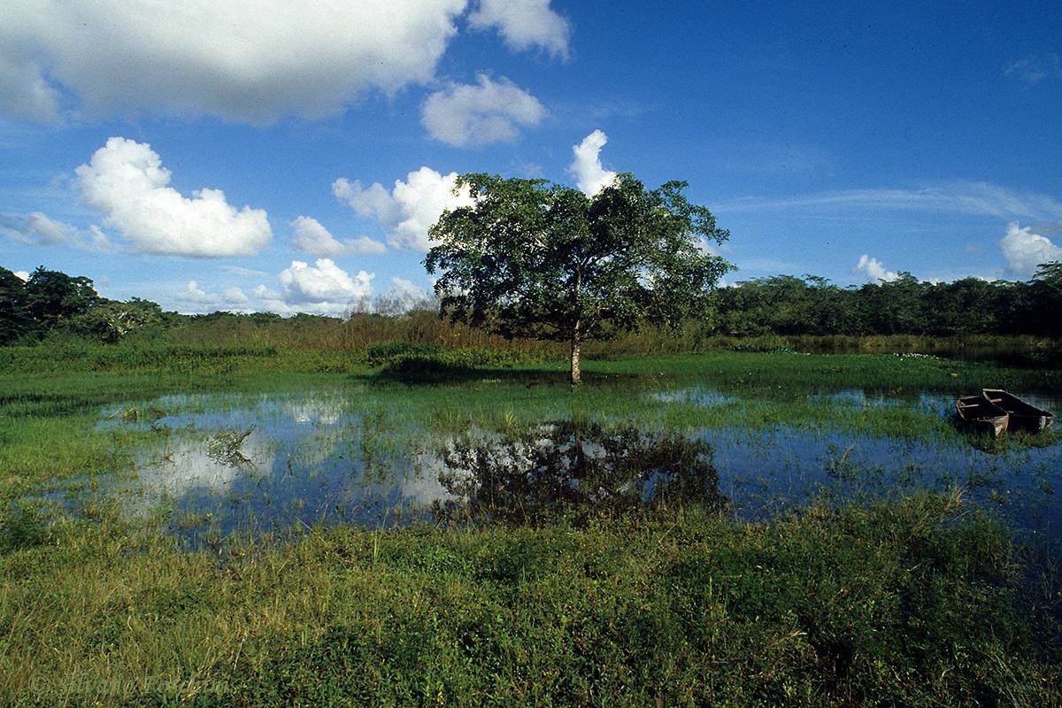 Belize \'90-015