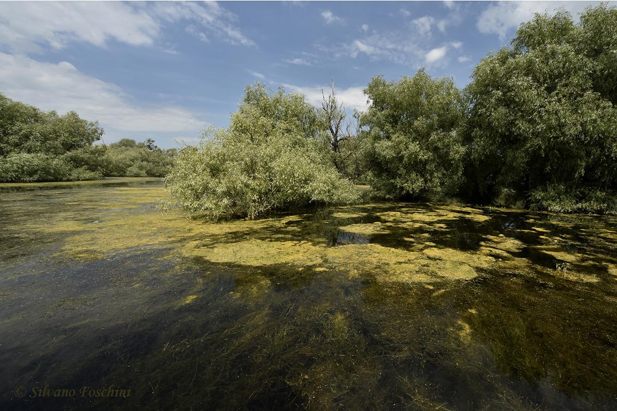 Delta del Danubio 005
