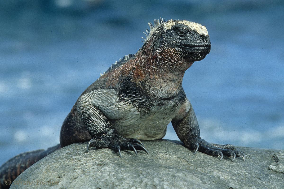 Galapagos \'85-006