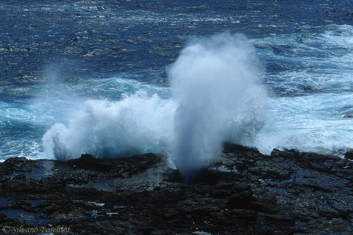 Galapagos \'85-008