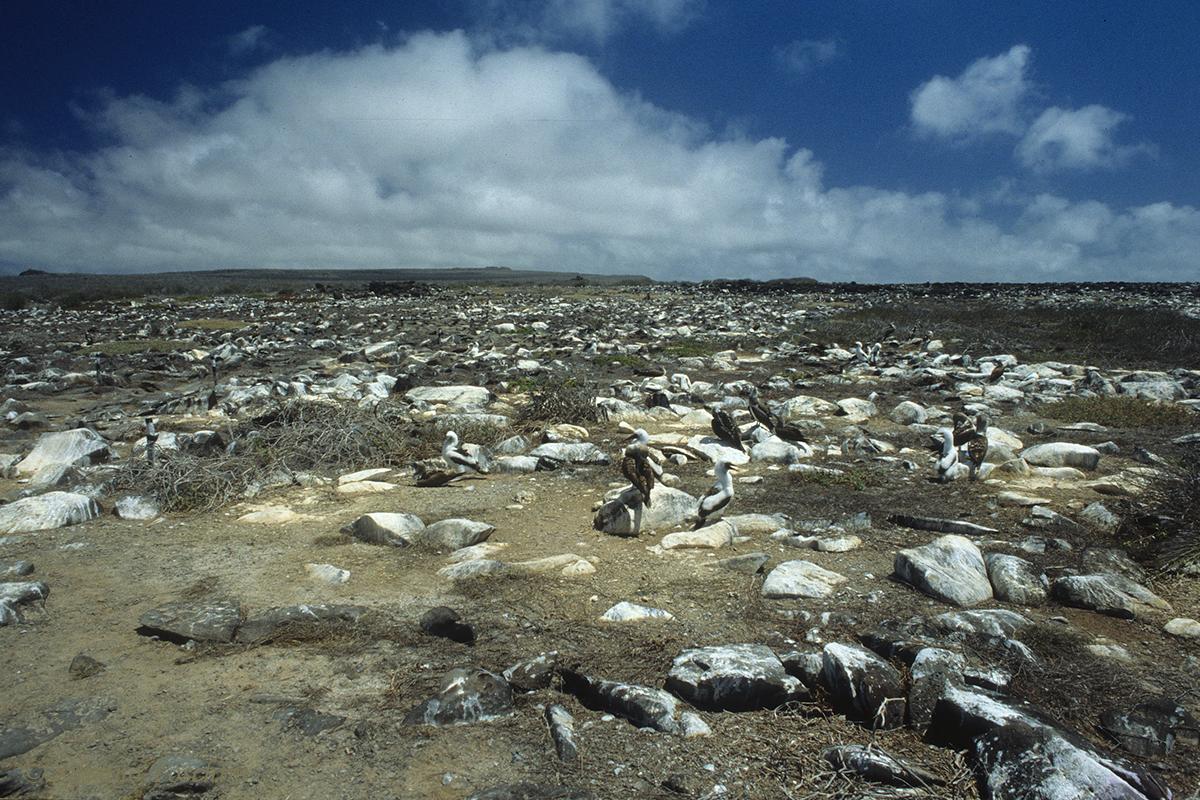 Galapagos \'85-010