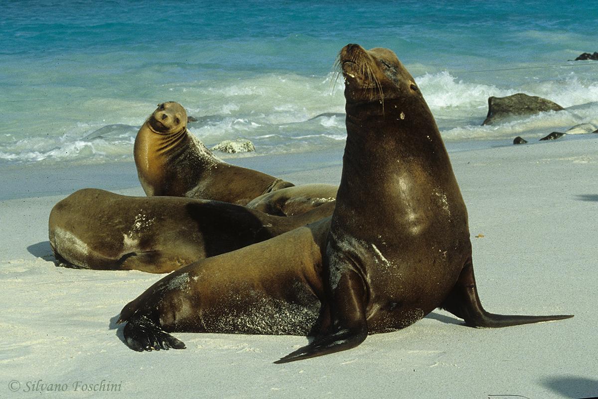 Galapagos \'85-014