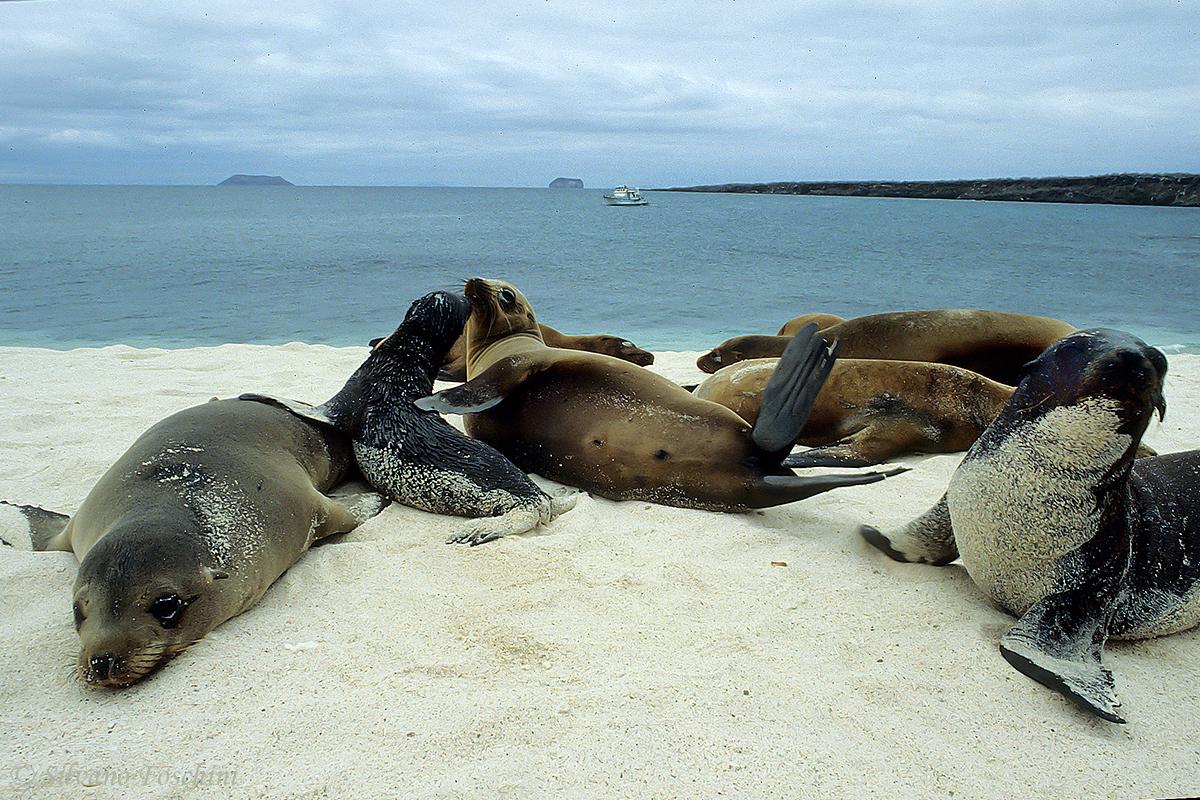 Galapagos \'85-016