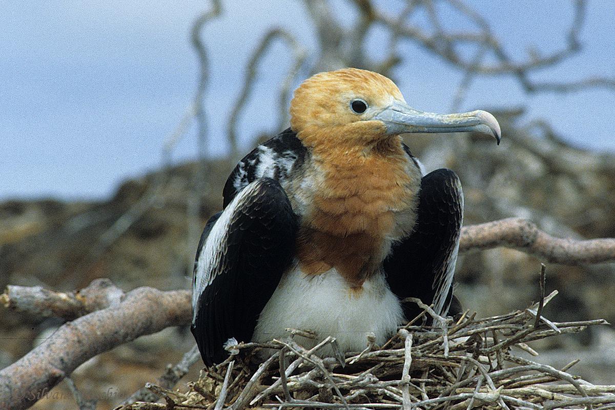 Galapagos \'85-022