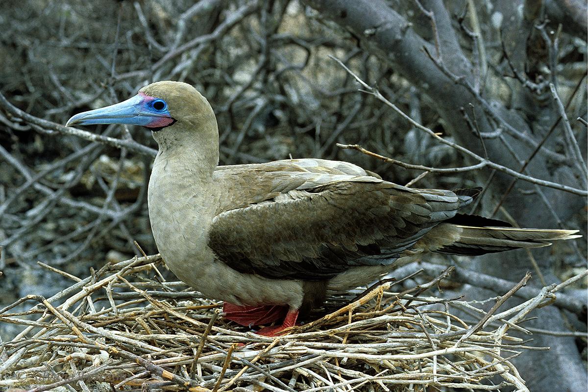 Galapagos \'85-026