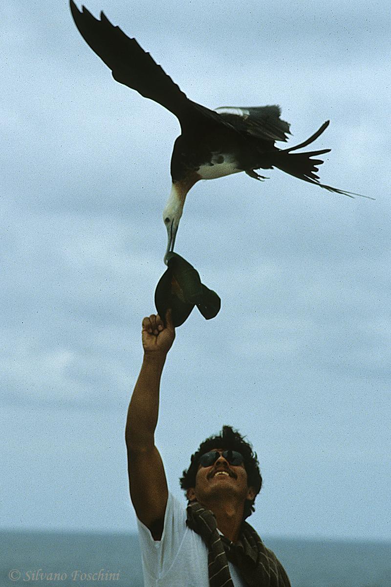 Galapagos \'85-027