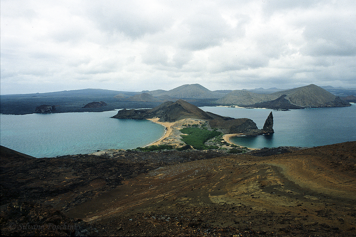 Galapagos \'85-029