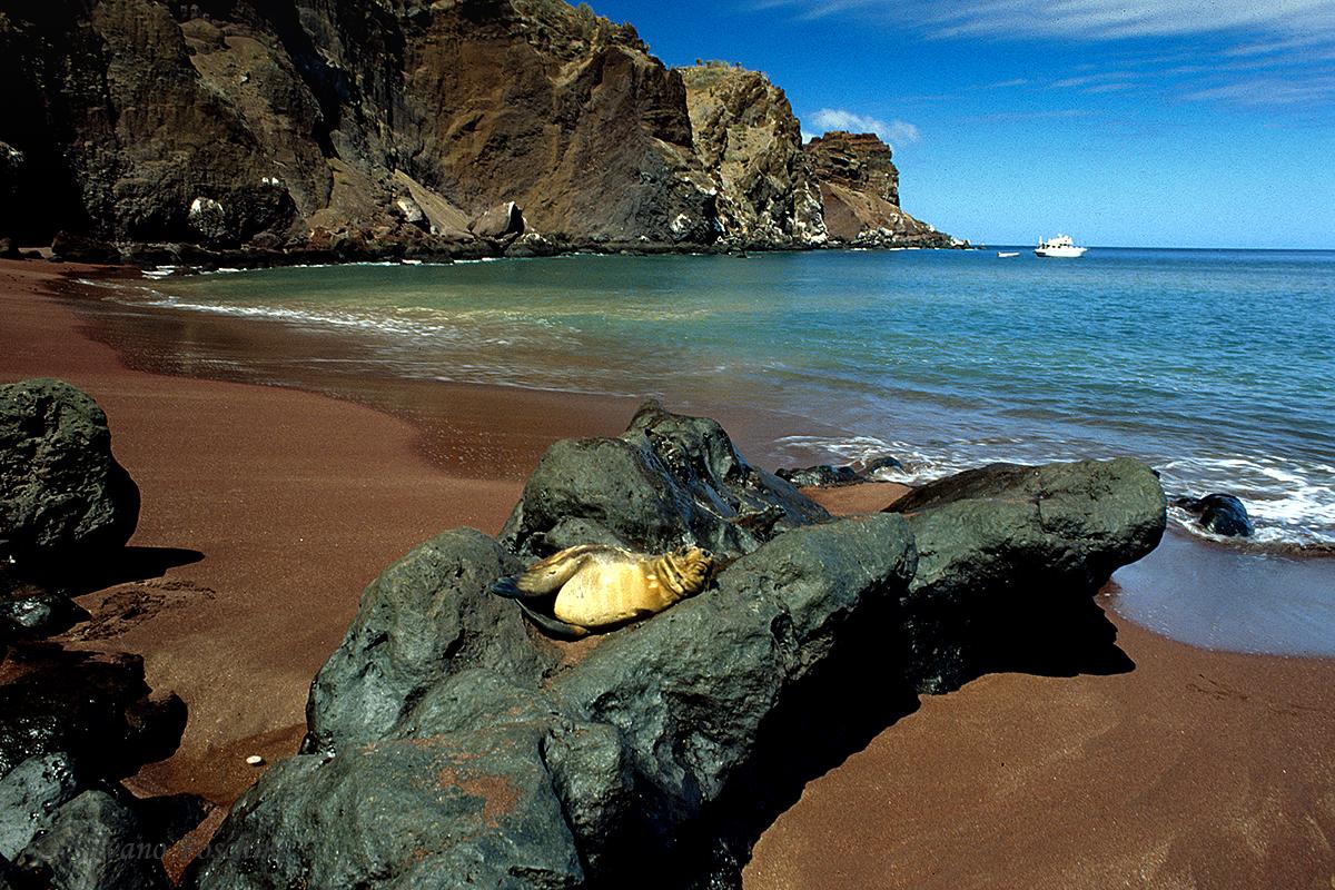 Galapagos \'85-032