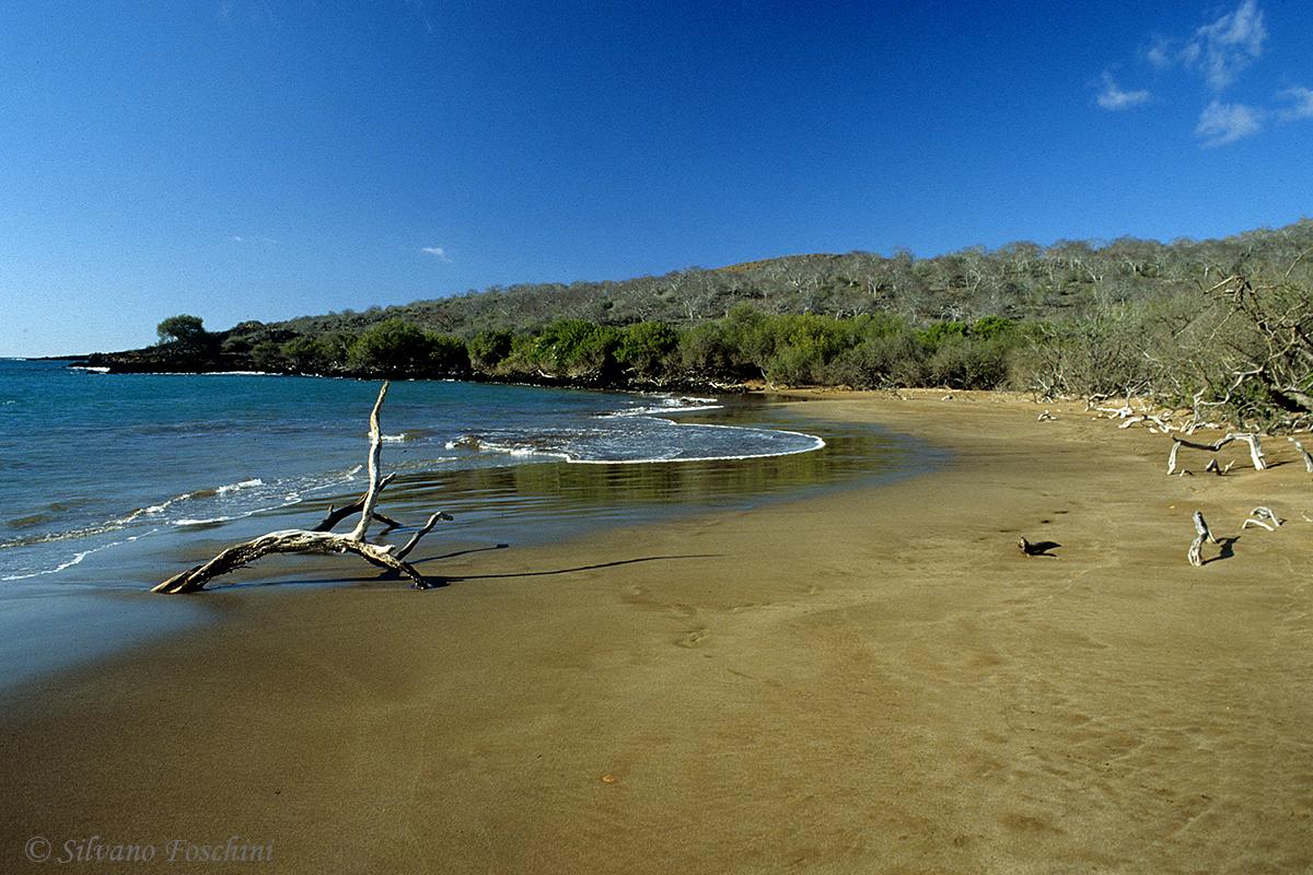 Galapagos \'85-036
