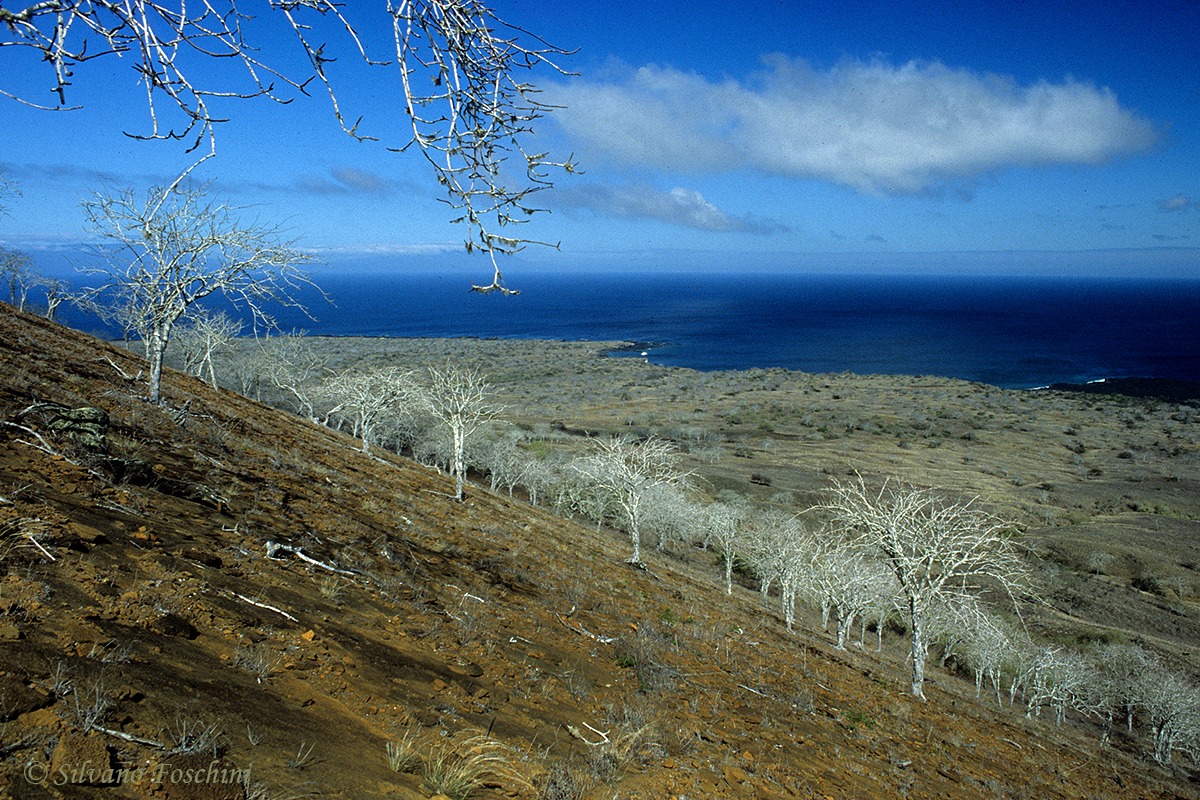 Galapagos \'85-039