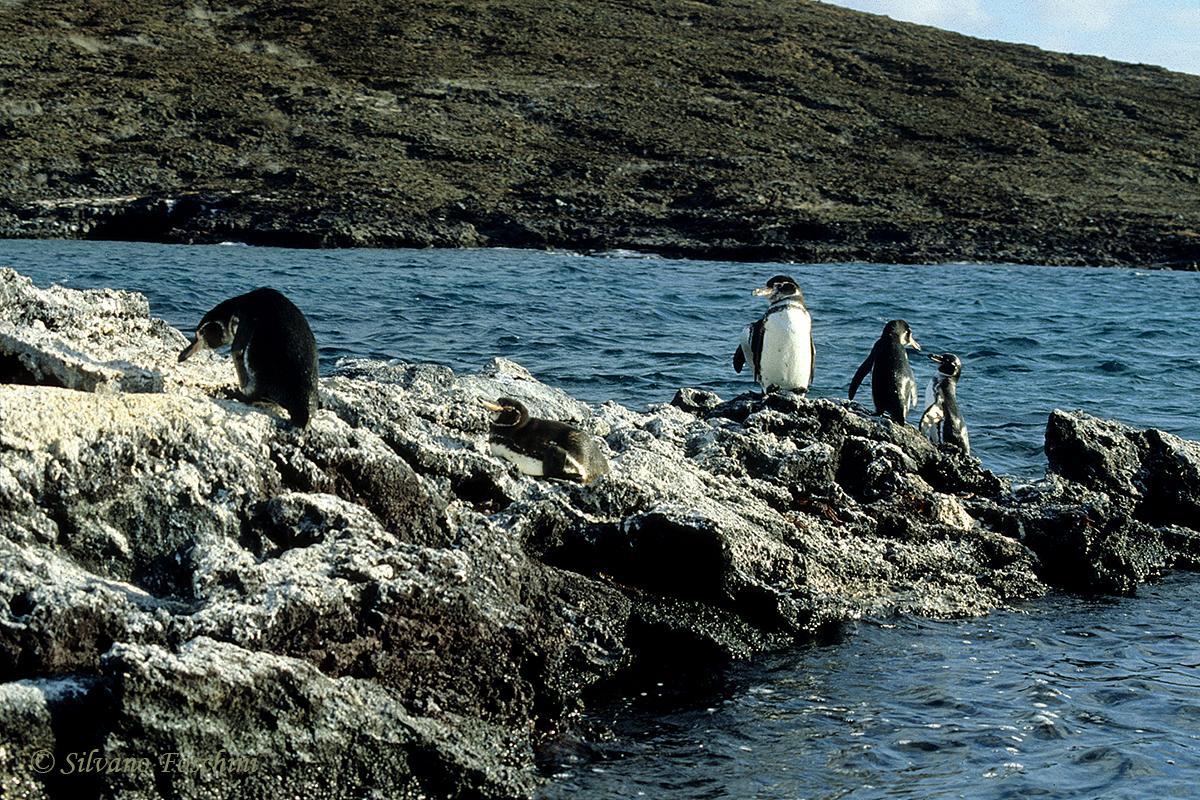 Galapagos \'85-043