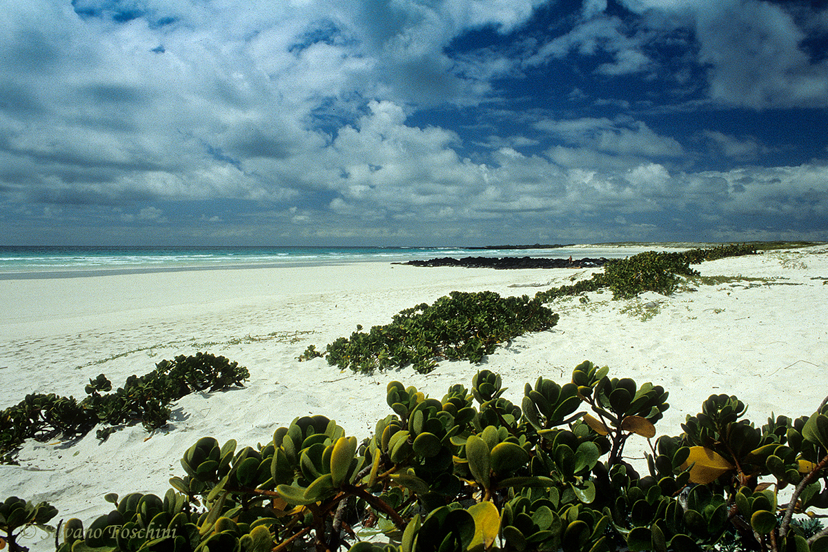 Galapagos \'85-046